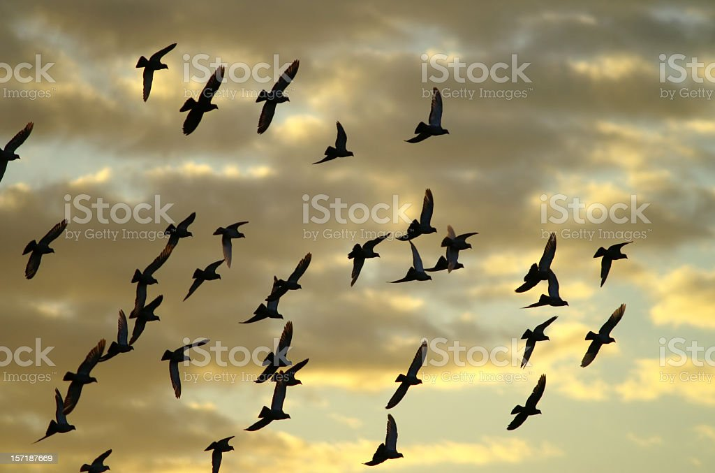 flying away royalty-free stock photo