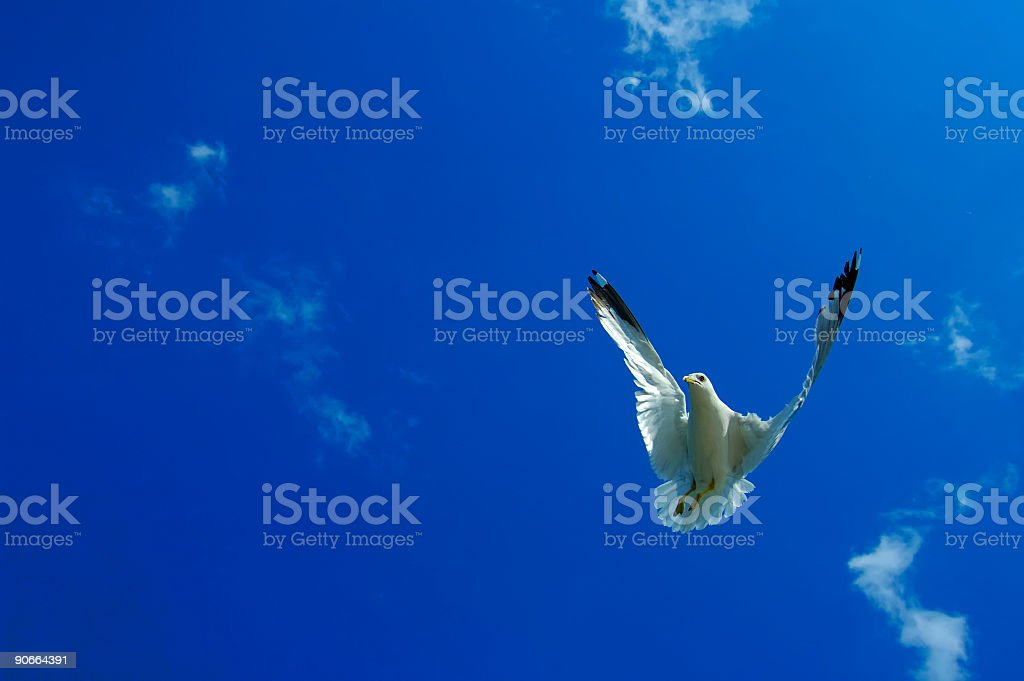 Flying Backwards stock photo