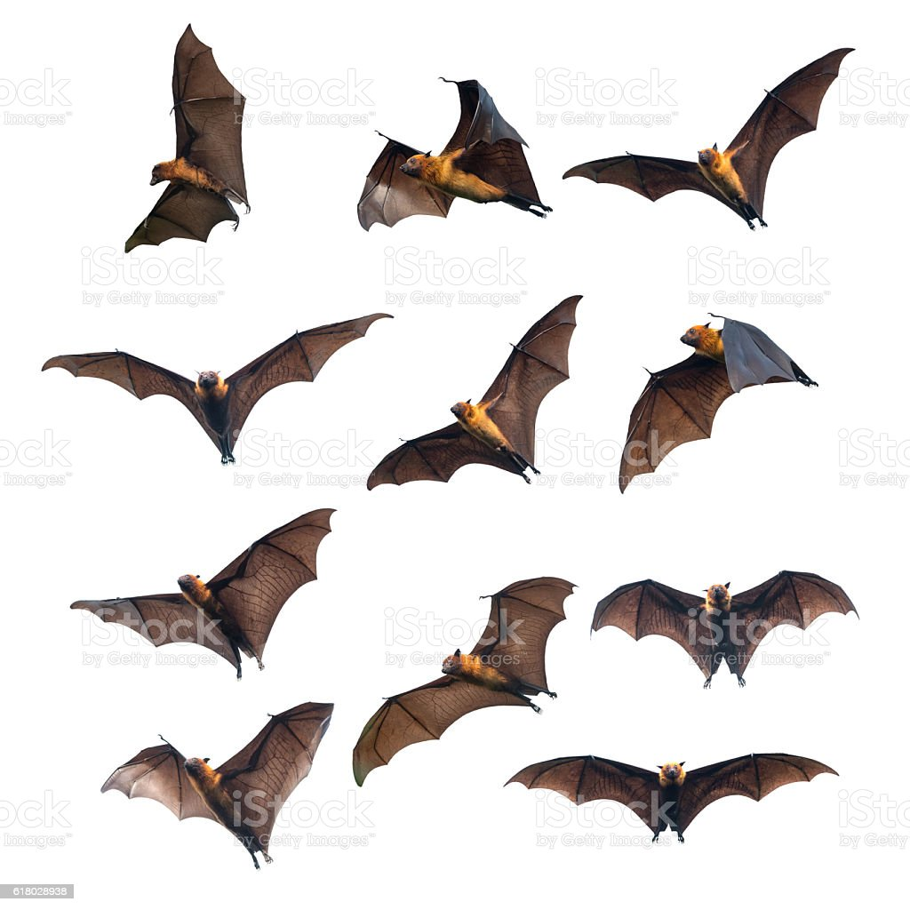 Flying bats isolated on white background stock photo