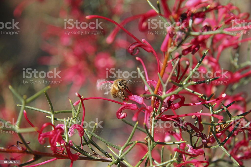 Flying Bees royalty-free stock photo