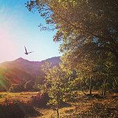 Flying bird at Mt. Tamalpias