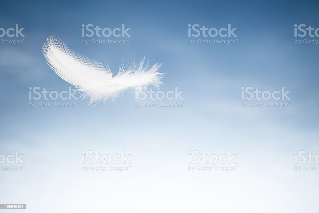 Flying Bird Feater - Sky White Blue Clouds stock photo