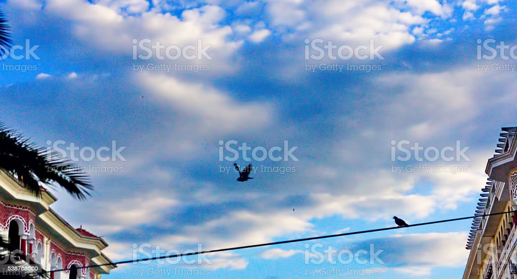 flying bird on a wire stock photo