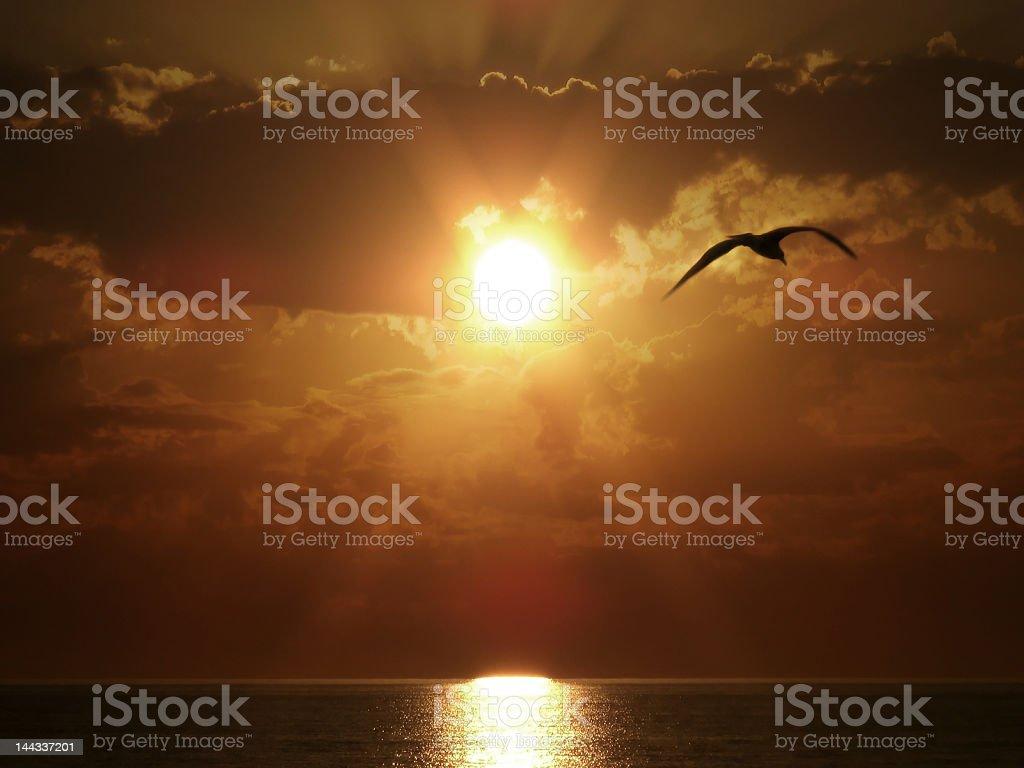 Flying Bird on Sea Sunset royalty-free stock photo