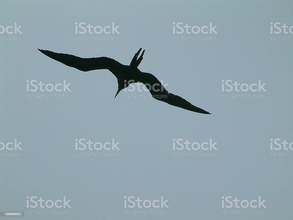 Flying bird silhouet royalty-free stock photo