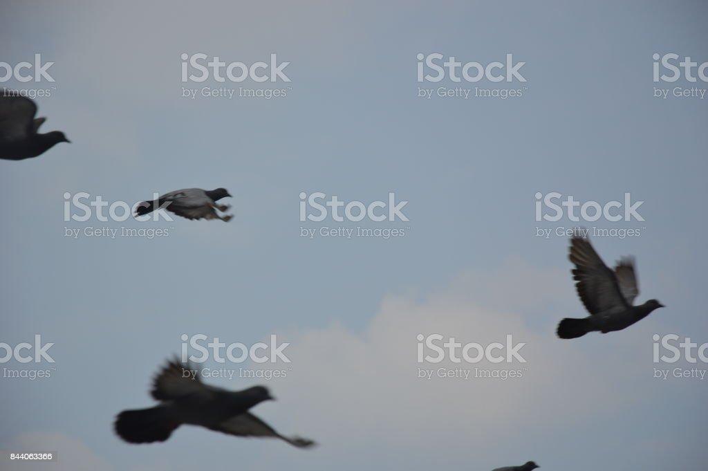 -   flying birds in the sky stock photo