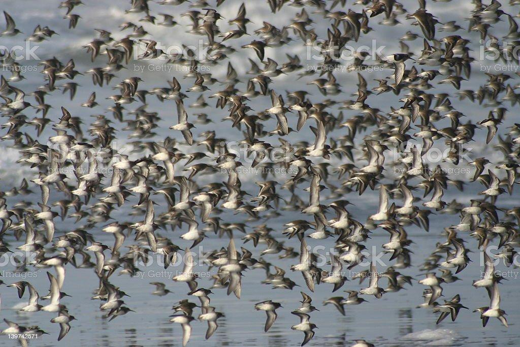 flying birds royalty-free stock photo