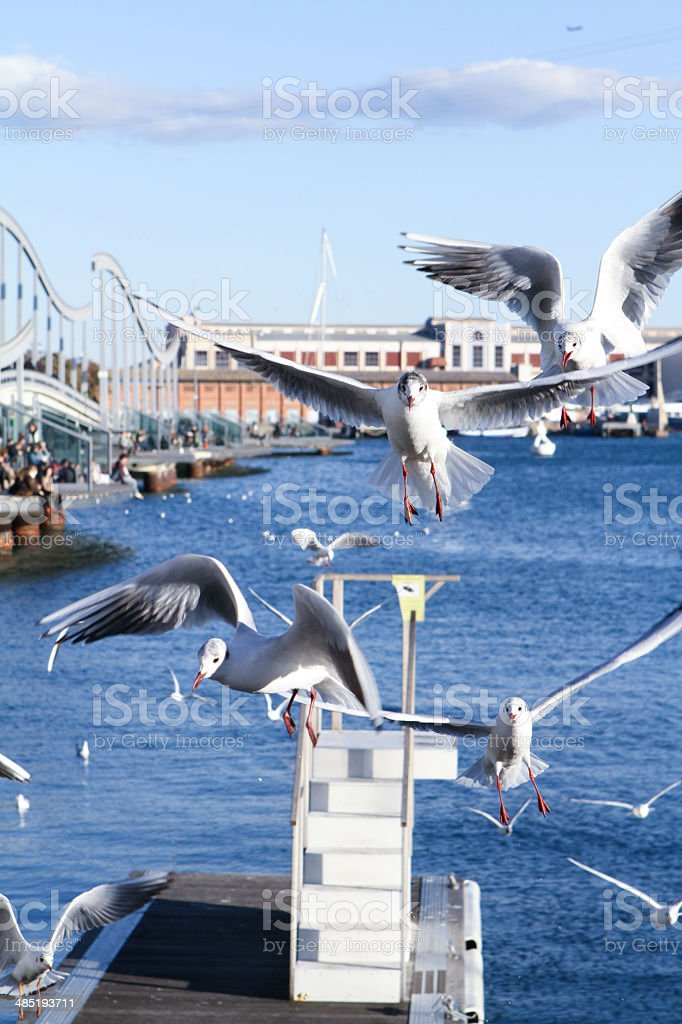 Segulls in a harbour.