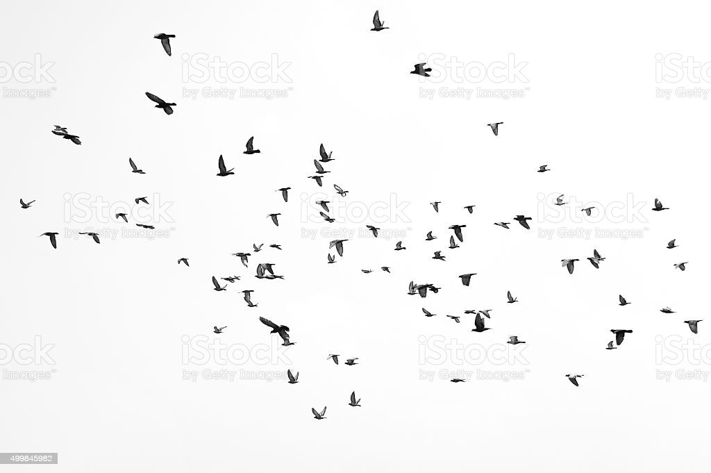 Flying birds stock photo