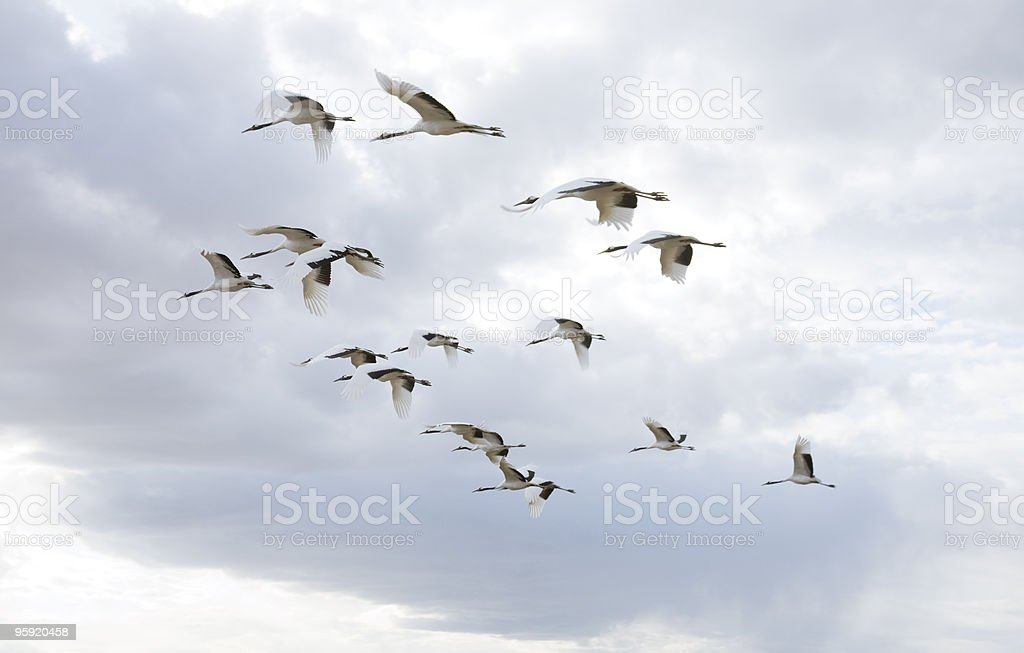 flying birds royalty-free stock photo