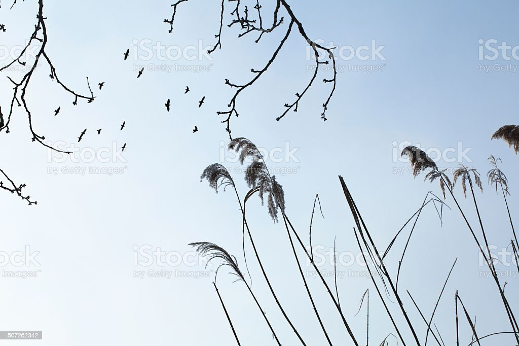 the flying black birds in the sky