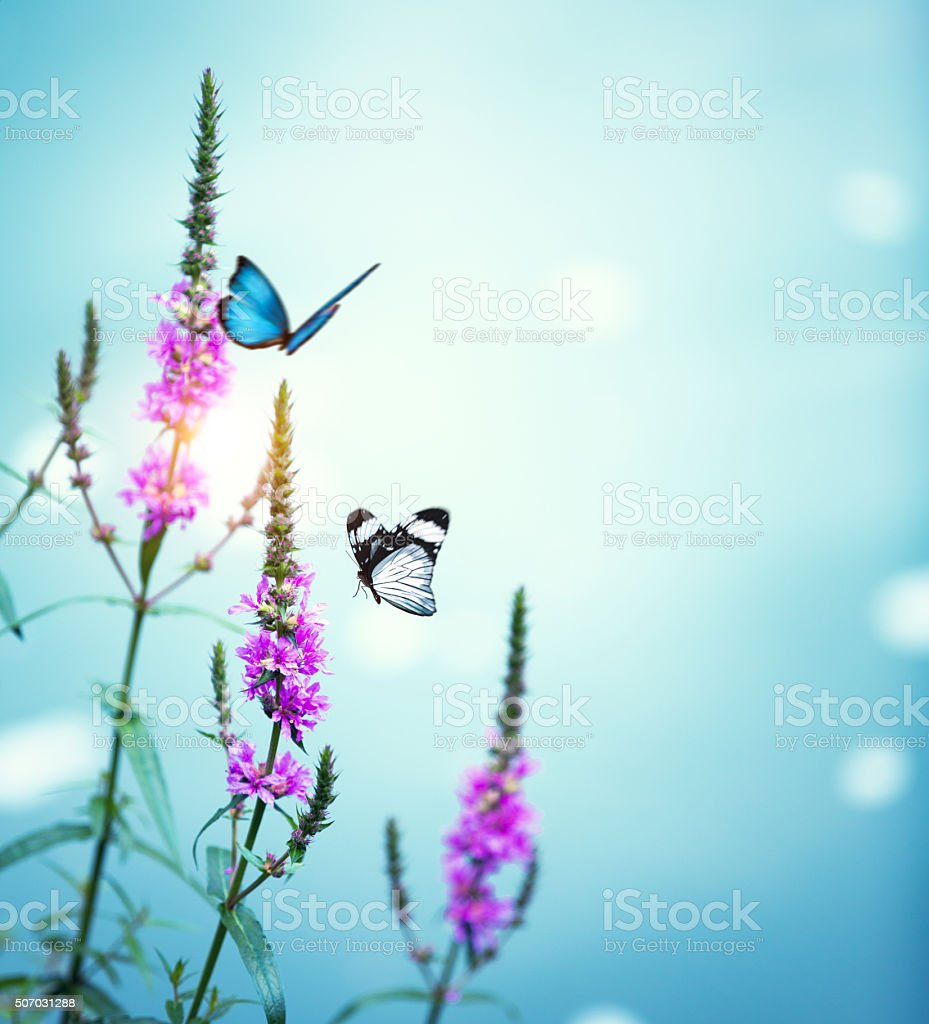 Flying Butterflies stock photo