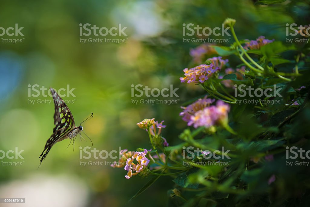 Flying butterfly with pink flower and green background stock photo