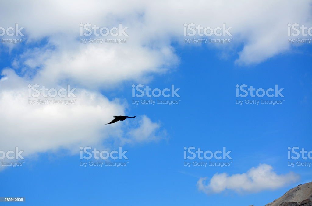Flying Crow between heaven and earth in a cloudy sky stock photo