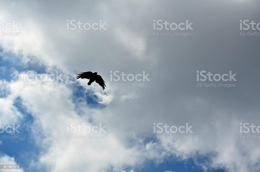 Flying Crow between heaven and earth stock photo