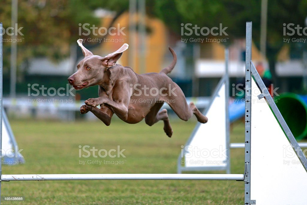 Flying dog stock photo