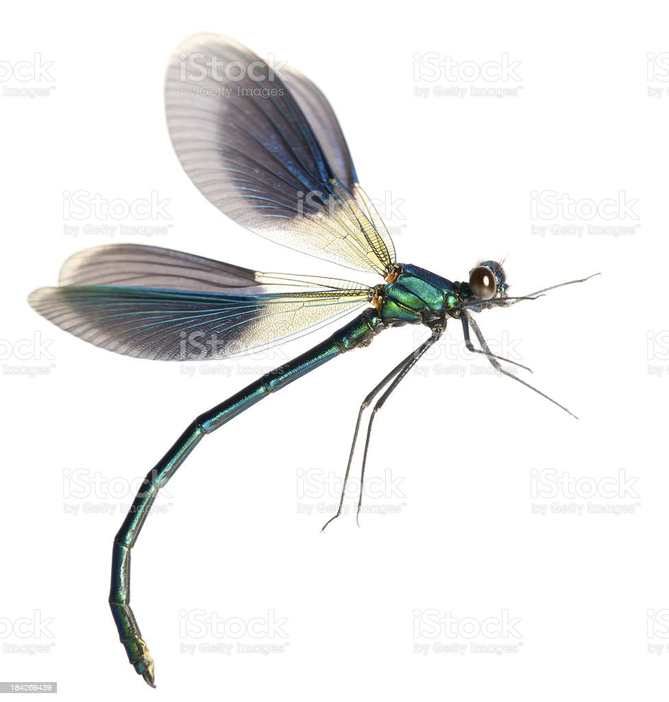 flying dragonfly royalty-free stock photo