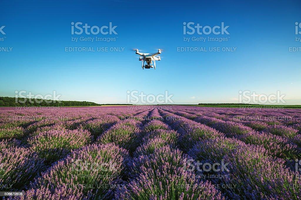 Varna, Bulgaria - June 22, 2015: Flying drone above lavender stock photo