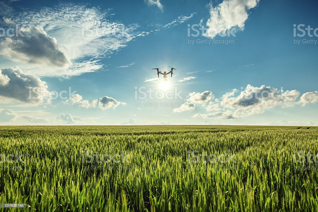 Flying drone and green wheat field stock photo
