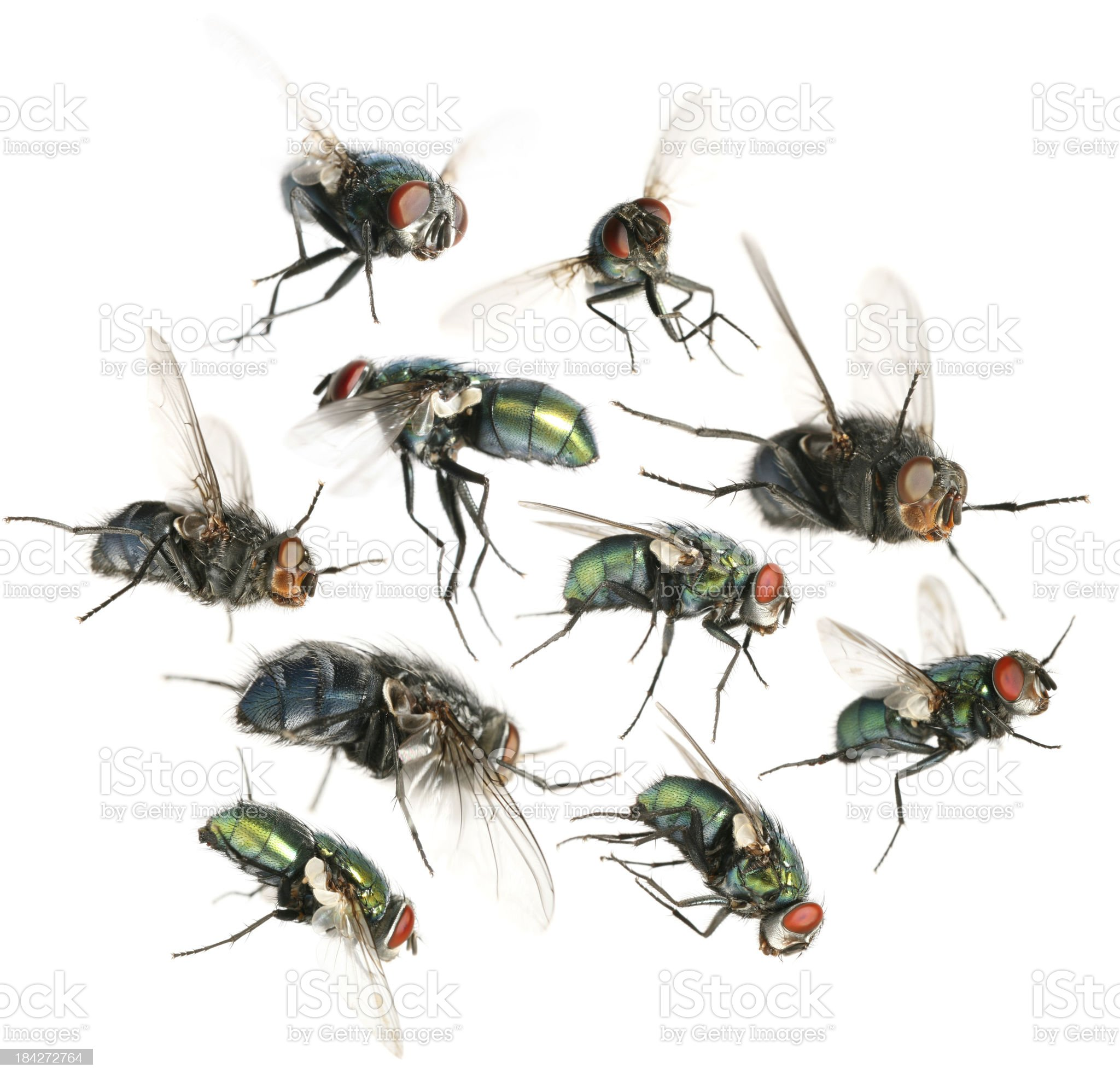 flying flies royalty-free stock photo