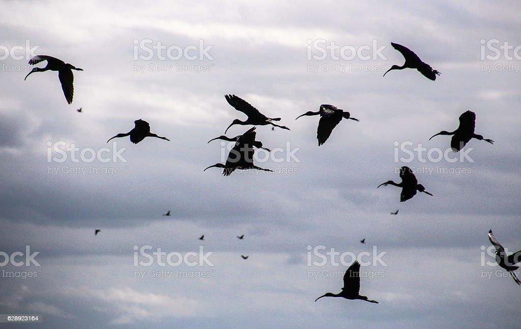 flying flock stock photo