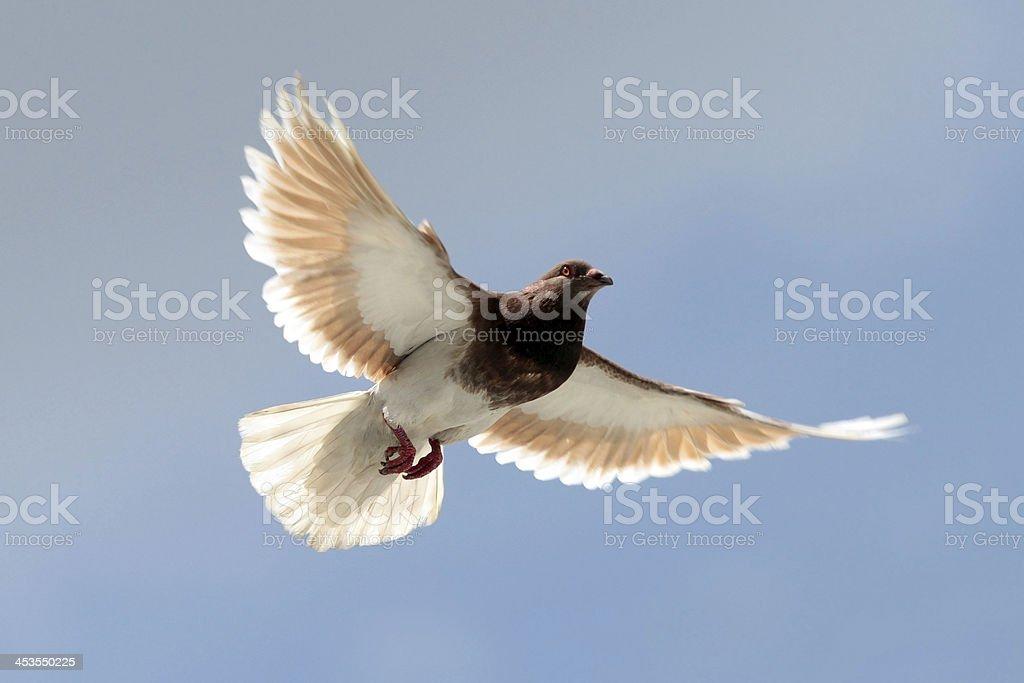 Flying Free royalty-free stock photo