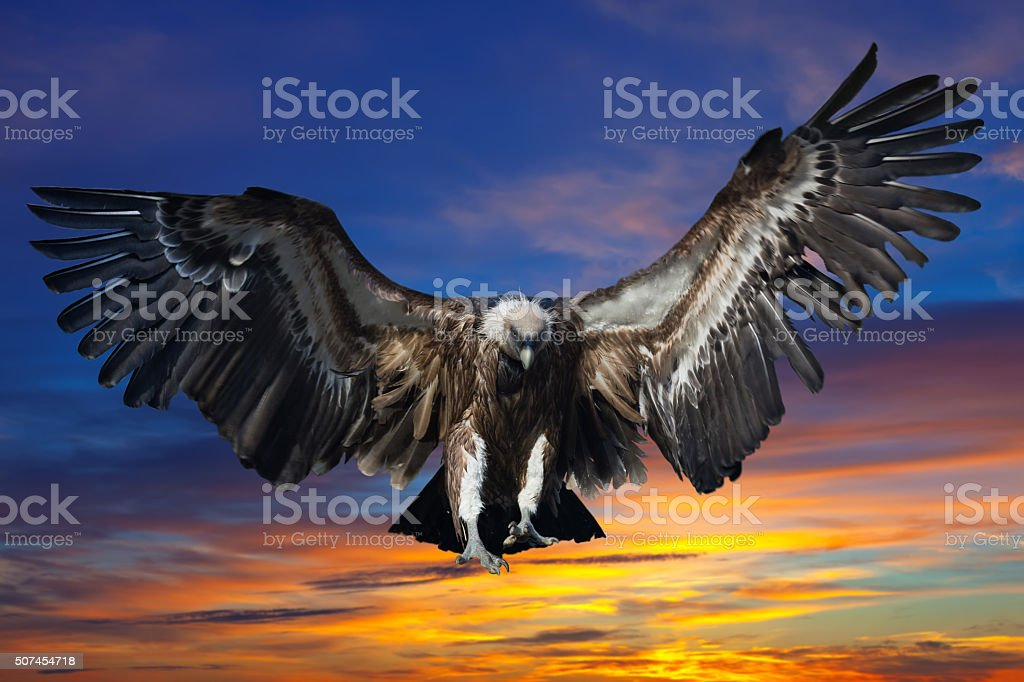 Flying griffin against sunset stock photo