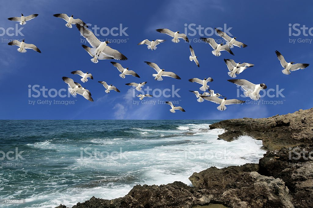 flying group of birds over sea royalty-free stock photo