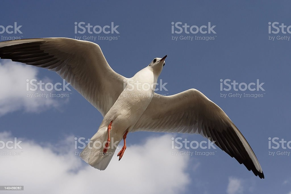 Flying High and Free royalty-free stock photo