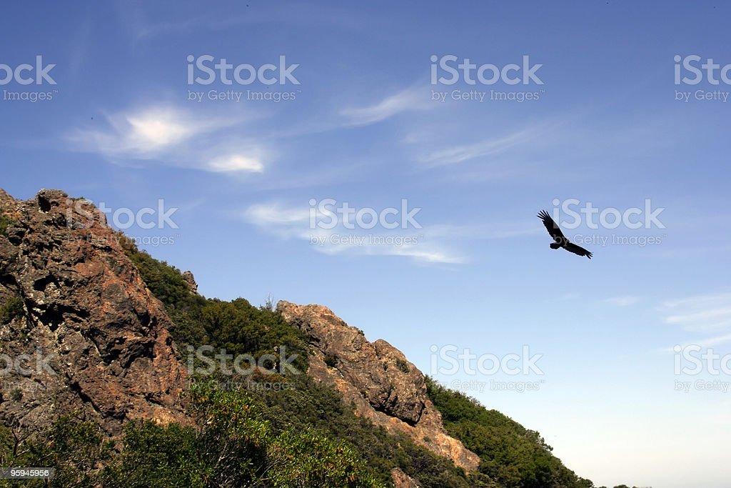 Voler haut vol, Urubu noir photo libre de droits