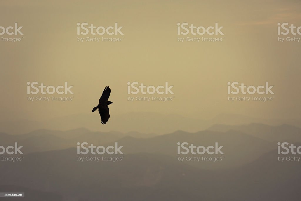 Flying high stock photo