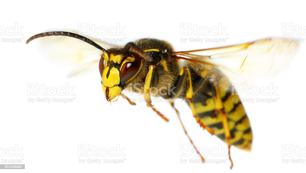 flying insect stock photo