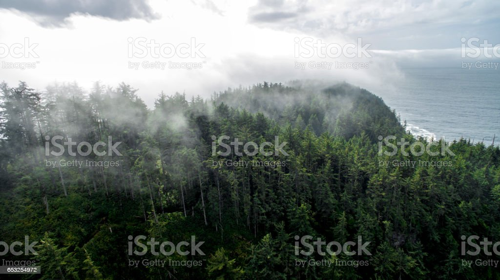 Flying Into the Misty Forest stock photo