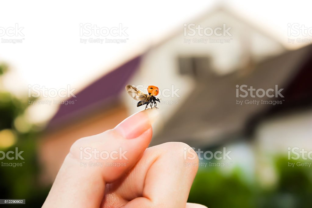 Flying ladybird stock photo