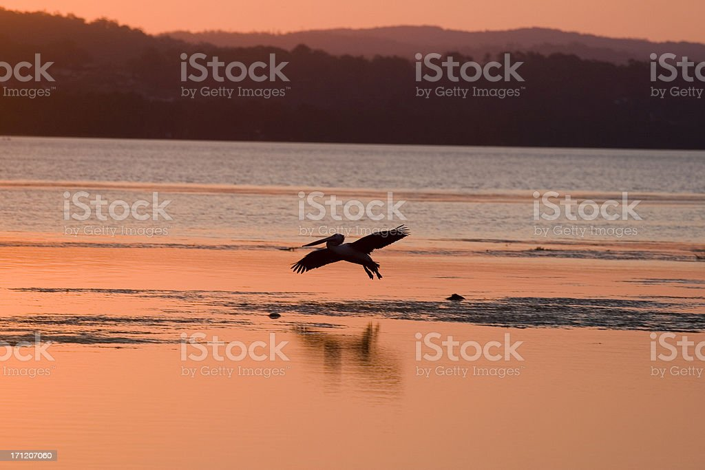 Flying low royalty-free stock photo