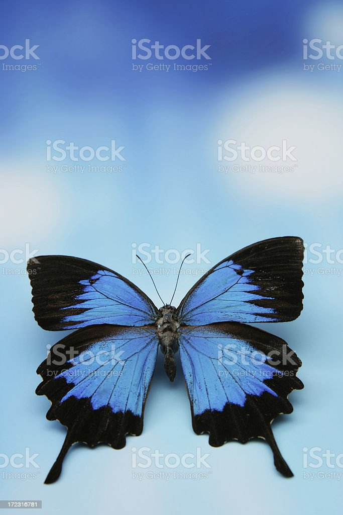 Flying off royalty-free stock photo