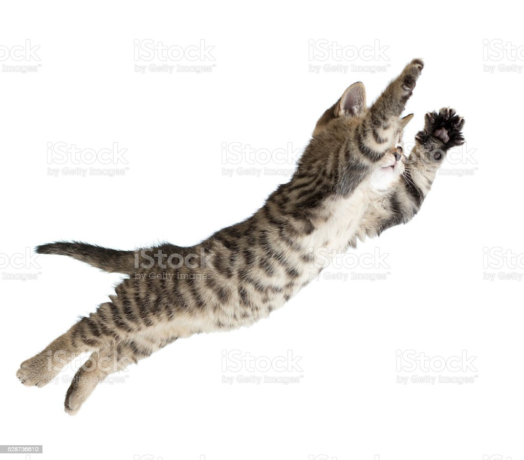 Flying or jumping kitten cat isolated stock photo