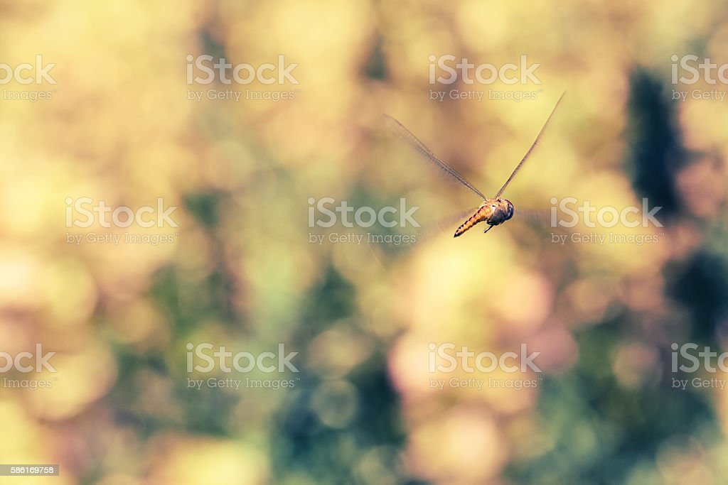Flying orange dragonfly with abstract background stock photo