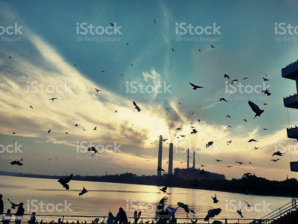 Flying pigeons.. stock photo