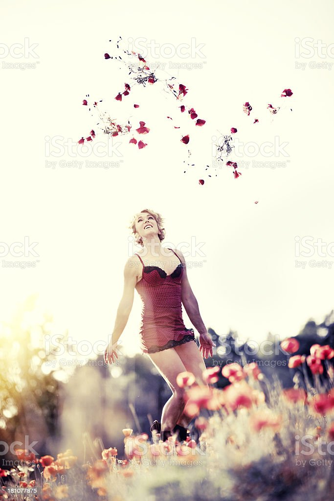 Flying poppies stock photo
