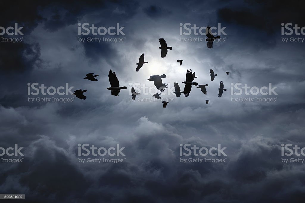 Flying ravens stock photo
