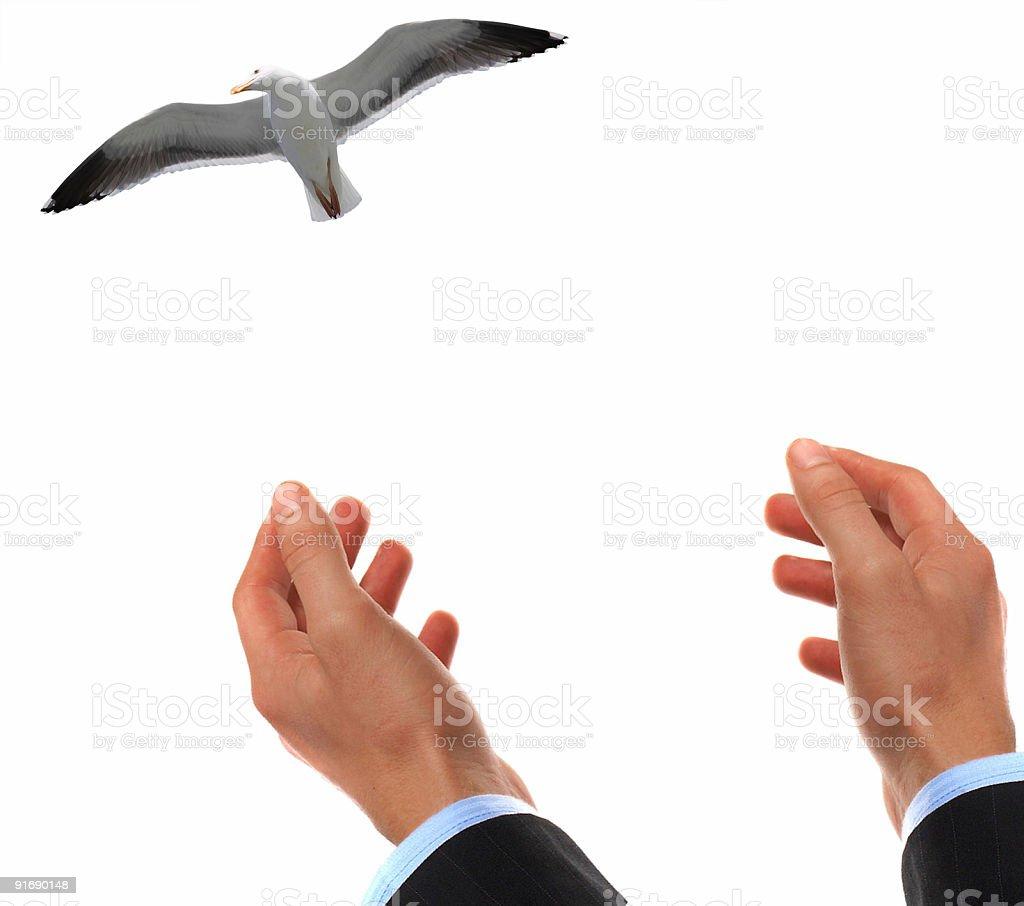 Flying sea gulls royalty-free stock photo