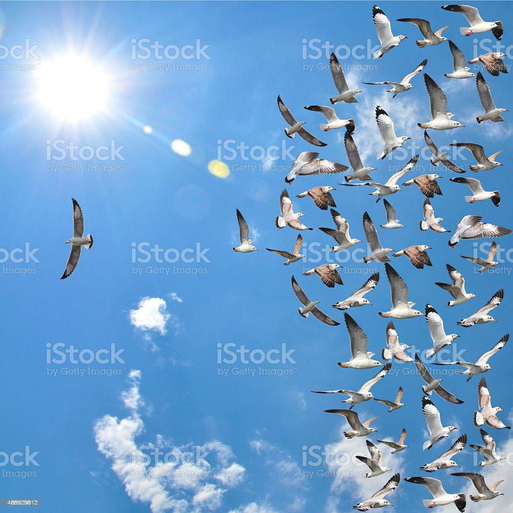flying seagull birds stock photo