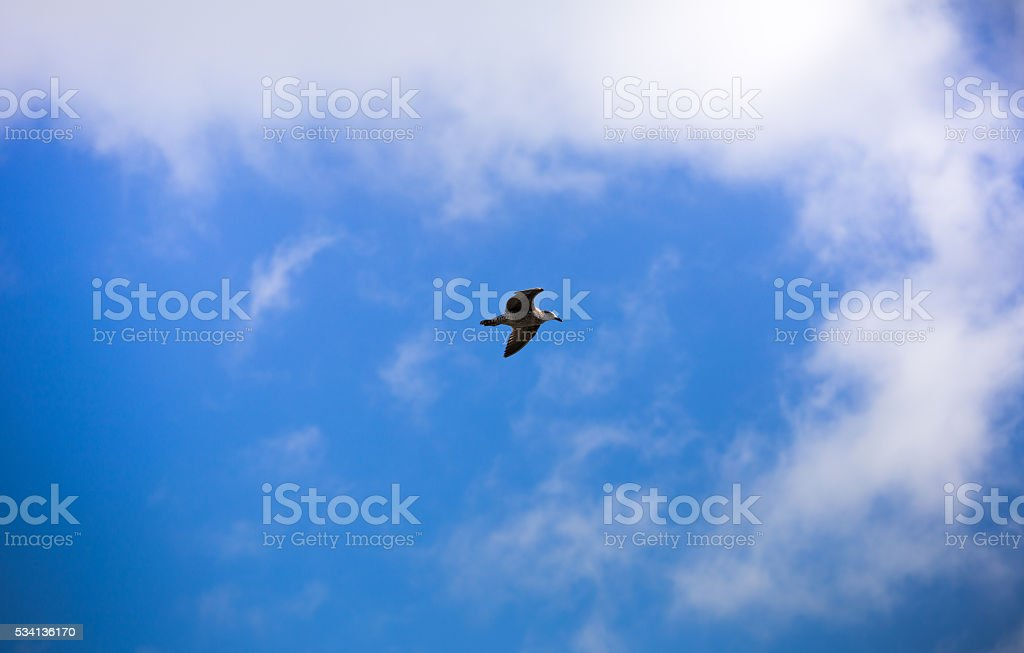 flying seagull on the bule sky stock photo