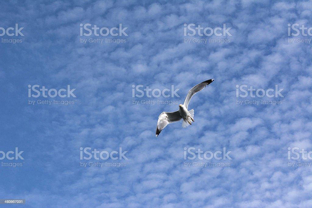 Flying Seagull.