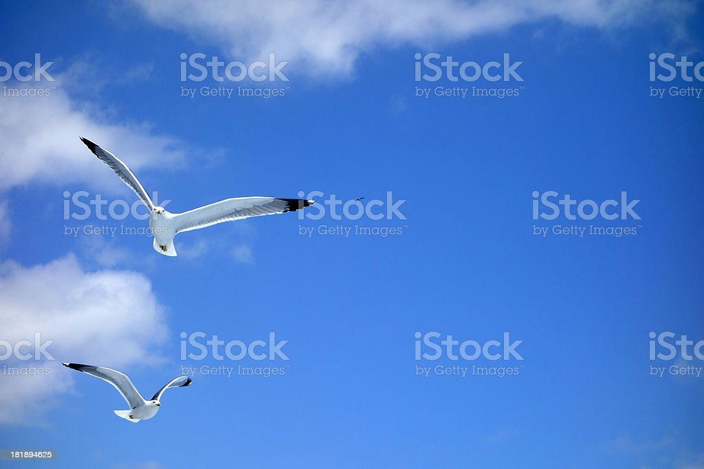 Flying seagulls on a blue sky royalty-free stock photo
