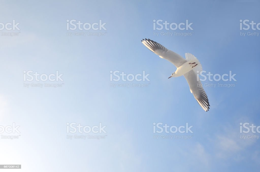 Flying, Sun, Cloud - Sky, Cloudscape, Summer
