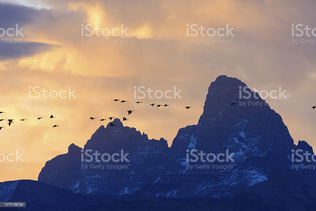 Flying South For The Winter stock photo
