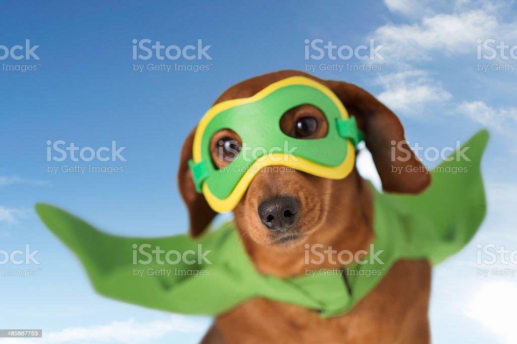 Flying superhero dog stock photo