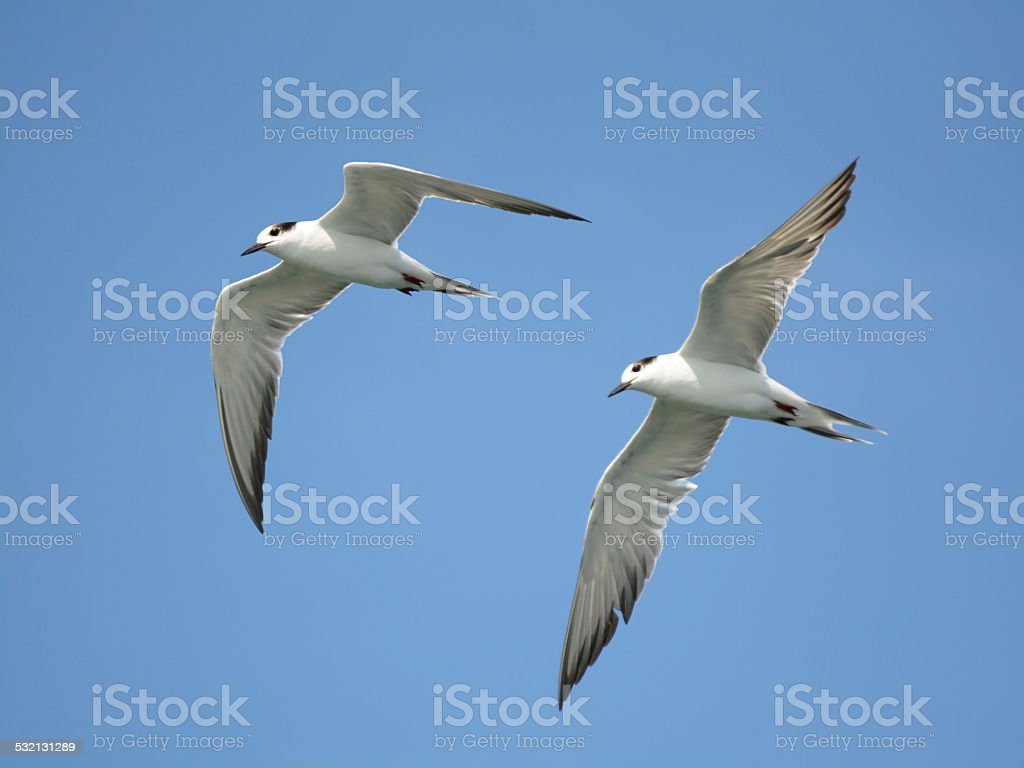 Flying together royalty-free stock photo